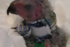 Kitty-Kollar-on-Lory-Parrot