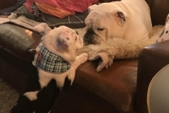 Henry-showing-off-his-plaid-Kanine-Kollar-to-his-buddy