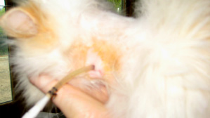 change kitty kollar step 4