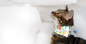 kitty kollar